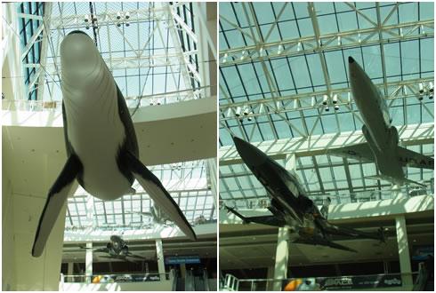 クジラ&飛行機