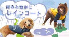 sdbn_rain2.jpg