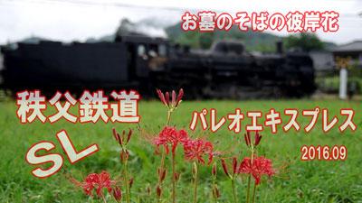 higanbana160919_223.jpg