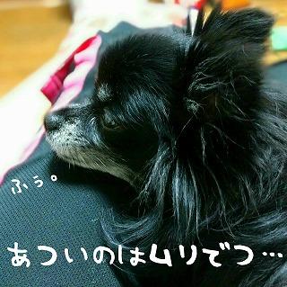 2016-08-13_19_54468.jpg