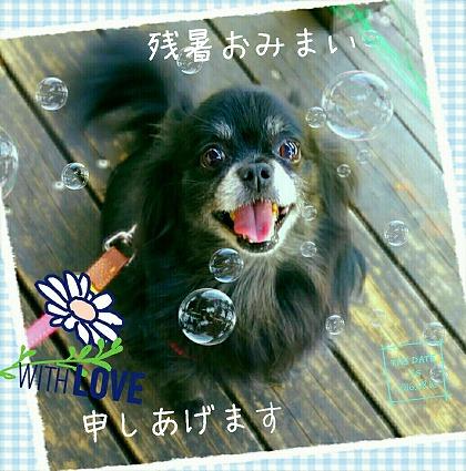 2016-08-16_15_54580.jpg