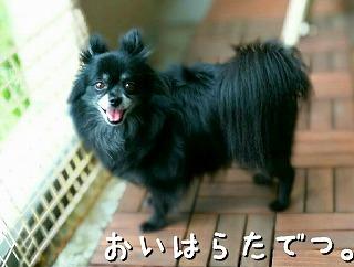 2016-09-11_16_55596.jpg