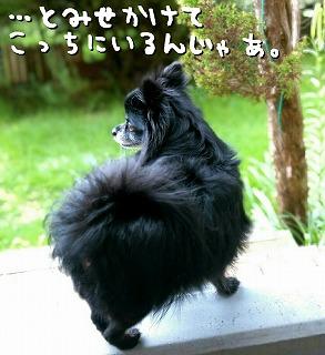 2016-09-11_16_55599.jpg