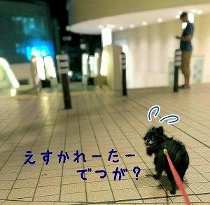 2016-09-15_084810.jpg