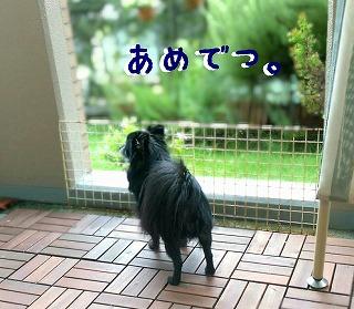 2016-09-21_23_56079.jpg