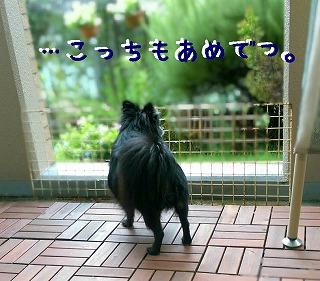 2016-09-21_23_56080.jpg