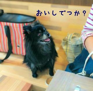 2016-10-08_235819.jpg