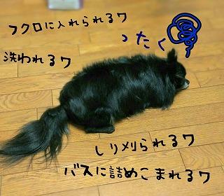2016-10-13_22_58431.jpg