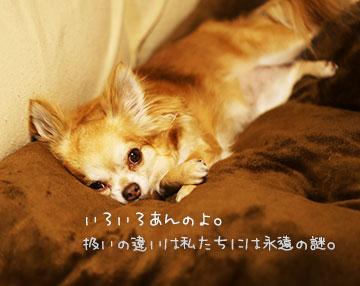 IMG_7113.jpg
