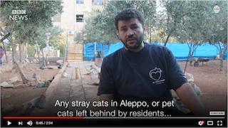 aleppo catman 201609-04