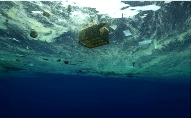 Microplastics junglebook news for P o fish