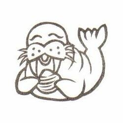 セイウチ貝