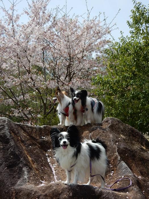 りぼんちゃん小梅ちゃんと岩の上で