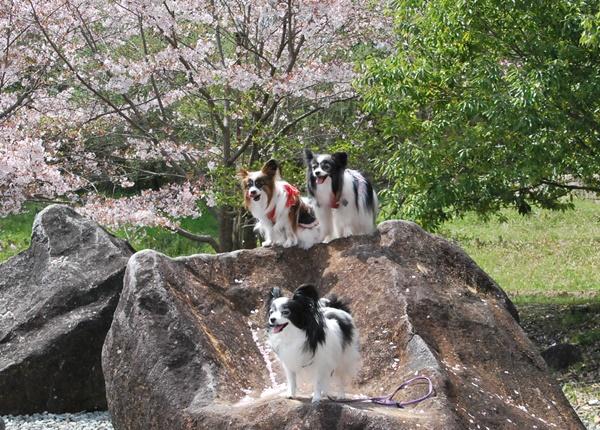 3パピ岩の上で