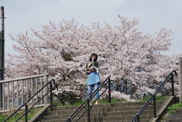 桜と抱っこのルビー