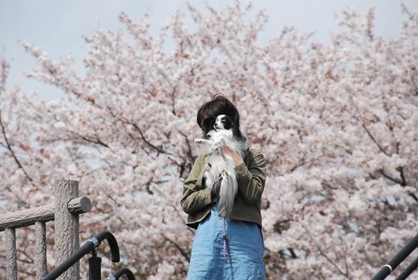 桜をバックにズーム