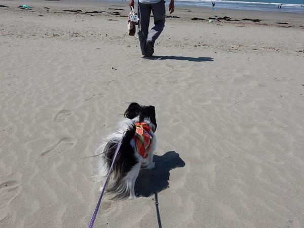 砂浜を歩くルビー1