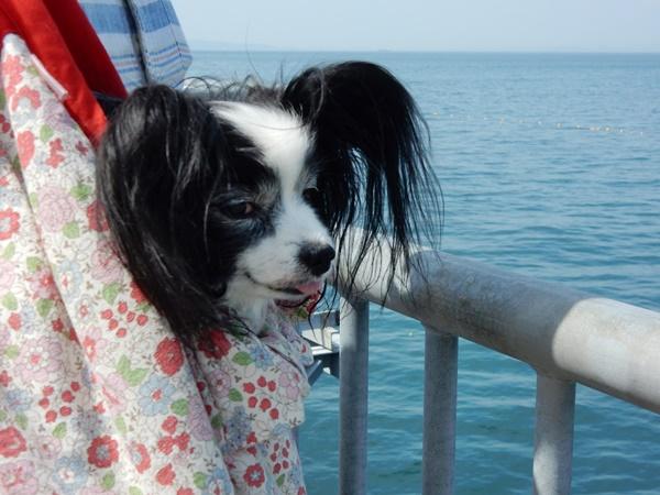 海を眺めるルビー
