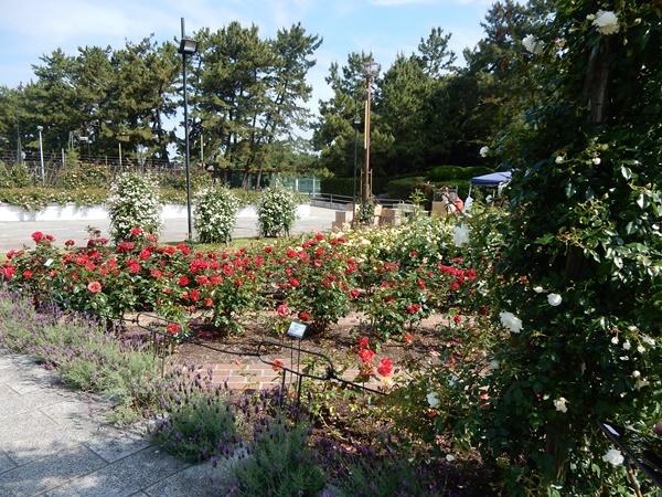 バラの花壇