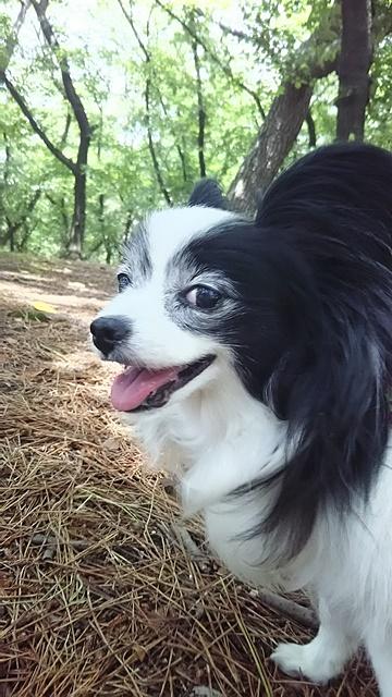 公園に来たよ