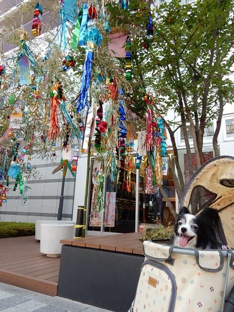 笹飾りとルビー3