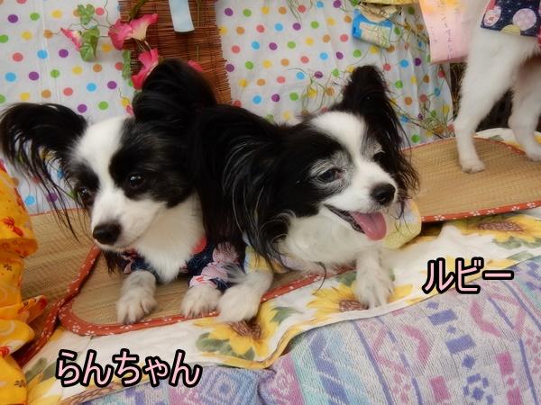 らんちゃん&ルビー