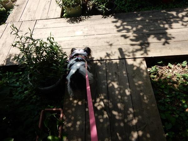 お庭をお散歩