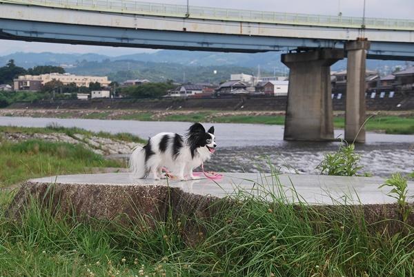 吉野川をバックに
