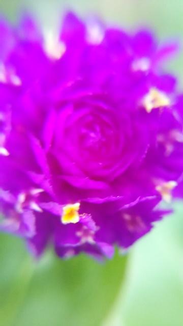 マクロの花1