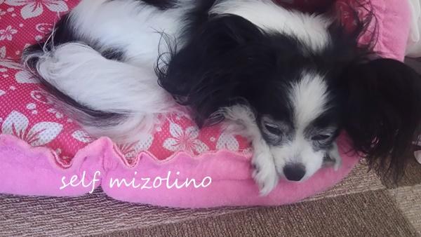 セルフミゾリーノ1