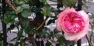 IMG_3101-3_2016042721033160c.jpg
