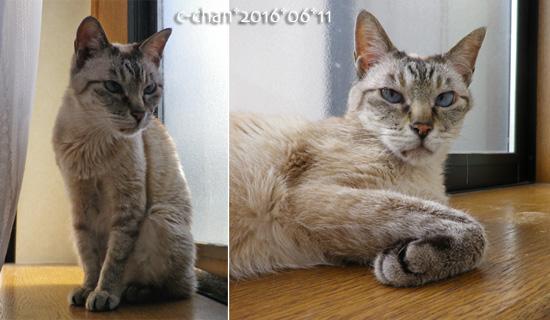 c-chan1606-2s.jpg