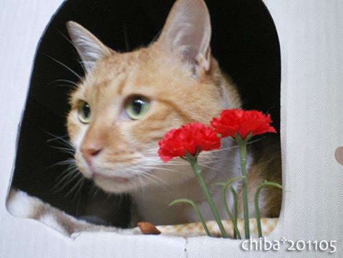chiba16-05-06.jpg
