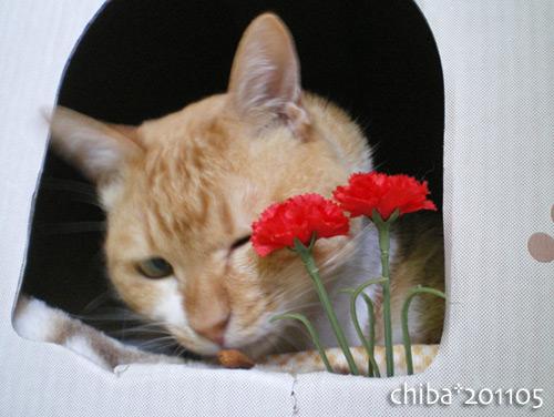 chiba16-05-07.jpg