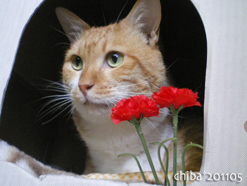 chiba16-05-10.jpg
