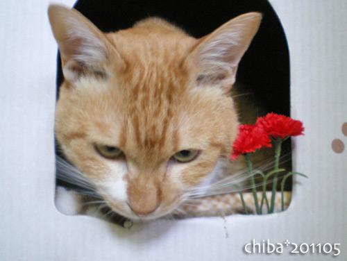 chiba16-05-12.jpg