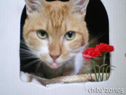 chiba16-05-13.jpg