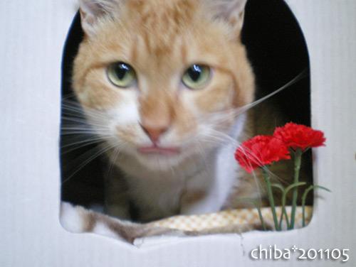 chiba16-05-14.jpg