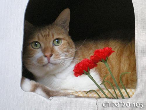 chiba16-05-17.jpg