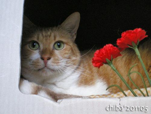 chiba16-05-18.jpg