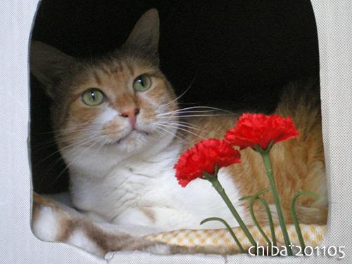 chiba16-05-20.jpg