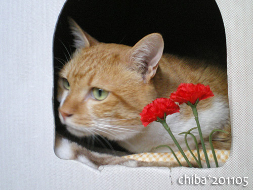 chiba16-05-22.jpg