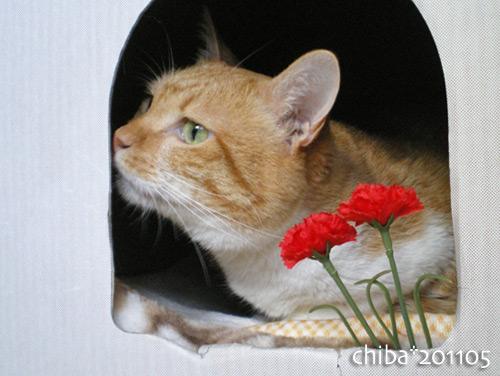 chiba16-05-24.jpg