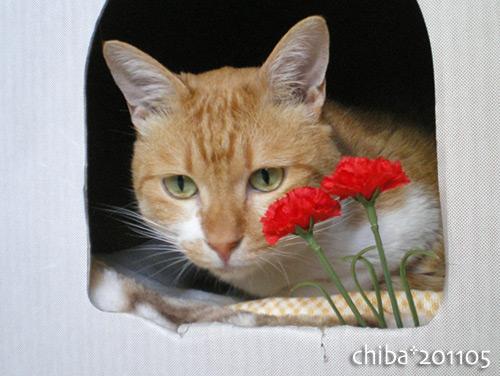 chiba16-05-29.jpg