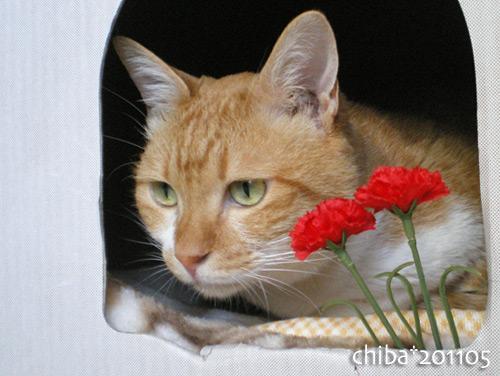 chiba16-05-31.jpg