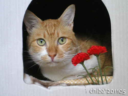 chiba16-05-32.jpg