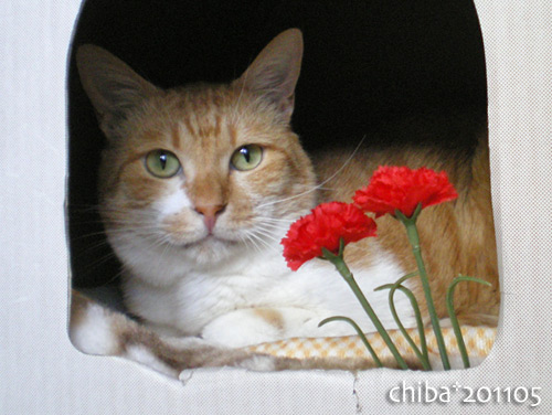 chiba16-05-33.jpg