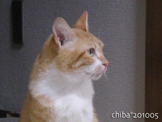 chiba16-05-36.jpg