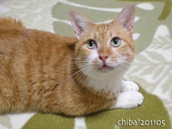 chiba16-05-43.jpg