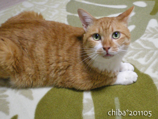 chiba16-05-44.jpg